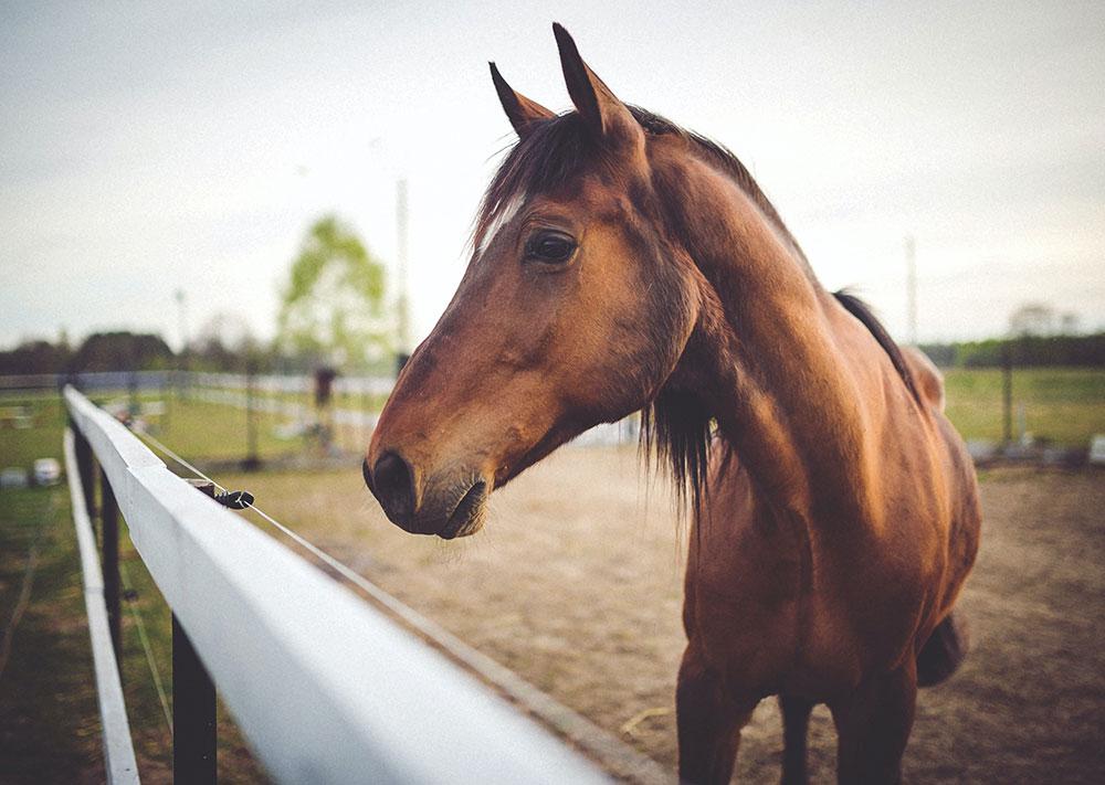 Horse Shoeing School